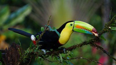 nature-wildlife